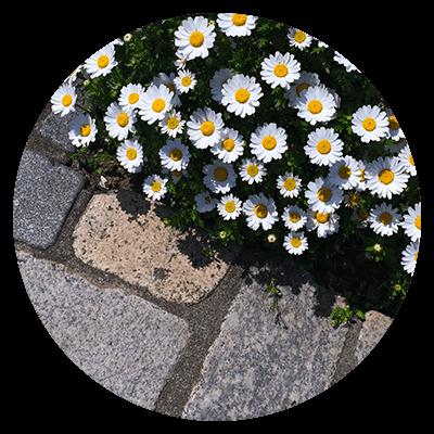 kostka_kwiat.png